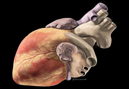 Sistema Respiratorio del Caballo | TopCavalls